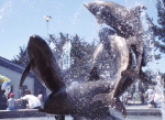 A FANFARE OF DOLPHINSMarine World Africa USA, Vallejo, CA [Bronze fountain, 14' h]